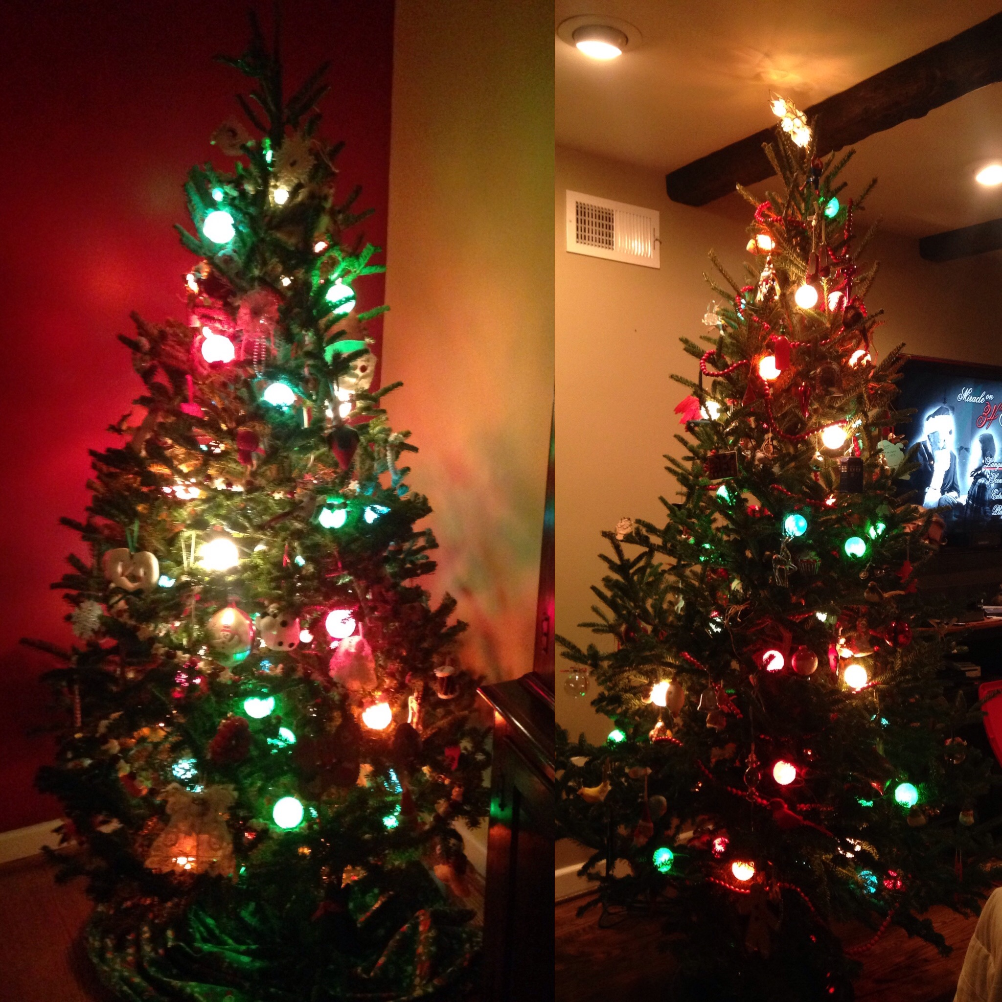 Two Christmas Trees